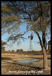 Rooikop waterhole near Nossob is a great place to wait for wildlife to come and drink