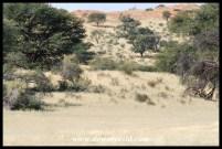 Kgalagadi Scenery