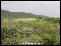 Serpentine wetlands
