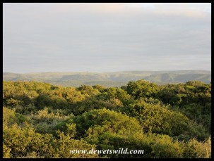 Early morning Addo scenery
