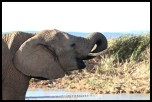 Herd of elephants at the waterhole