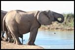 Herd of elephants at the waterhole (photo by Joubert)