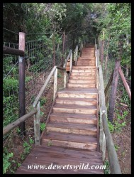 Steps leading up to the Kwasheleni Tower
