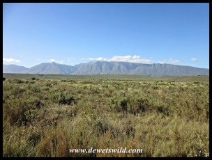 The renosterveld plains of the Bontebok National Park, with the Langeberge in the background