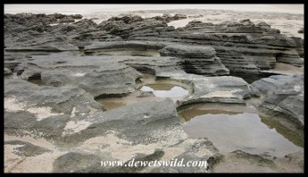 Intertidal rock pools at Cape Vidal