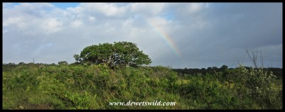 Rainbow along the Grassland Loop