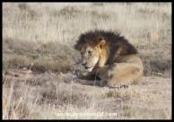 King Roy, in repose
