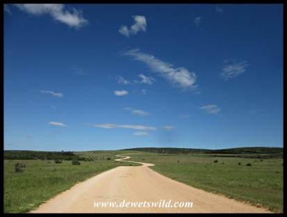 Scenic road snaking through Addo Elephant National Park