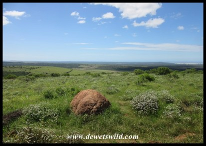 Looking out over Addo Elephant National Park to Algoa Bay in the background