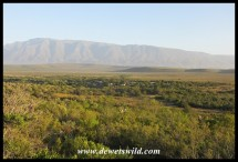 The view from Aloe Hill towards Lang Elsie's Kraal Rest Camp, with the Langeberg in the distance