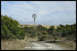 Windpump along a stream in the Mountain Zebra National Park