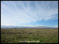 Wide open spaces in the Mountain Zebra National Park