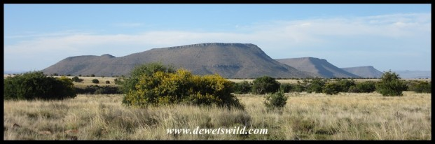 Wide open spaces at Mountain Zebra National Park