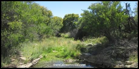 River crossing in Mountain Zebra National Park