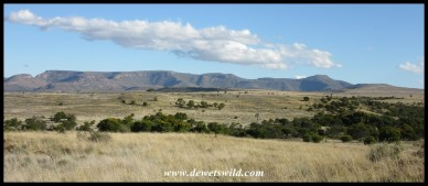 Mountain Zebra National Park's wide open spaces