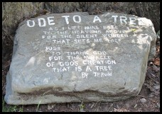 Ode to a tree