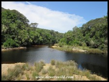 The Groot River at Nature's Valley