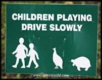 Beware of children being followed by guineafowl and tortoises...