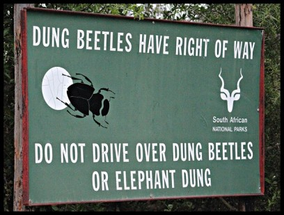 Taking care of dung beetles at Addo Elephant National Park