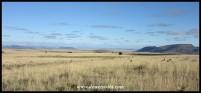 Springbok dot the Rooiplaat Plateau