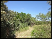 Walking trail in Bontebok National Park