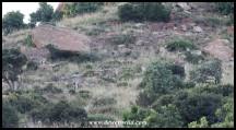 Plains Zebra on a hill at Golden Gate