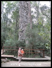 "Marilize and Joubert (age 9 months) at ""The Big Tree"" of the Tsitsikamma Forest - Outenique Yellowwood (Podocarpus falcatus)"
