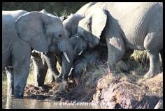 Baby elephant rescue at Tlopi