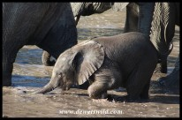 Tiny youngster crossing next to mom
