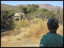 Joubert eyeing a bull elephant at Tlopi Tented Camp in Marakele National Park