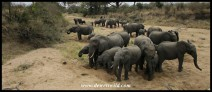 Elephants congregating in a dry river bed