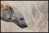 Spotted Hyena profile