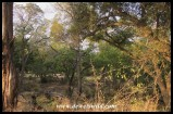 A slice of the riverine forest along the Sabie River