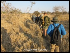 Walking single-file through the veld