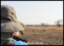 Peaking over Joubert's shoulder while he photographs the angry lionesses