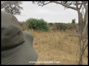 Joubert eyeing an elephant while on foot