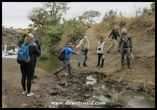 Stepping carefully over a pool in the Nungwini (where there are crocodiles!)