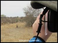 Joubert aiming his lens at the elephants