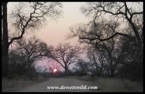 Sunrise on the Marula Loop