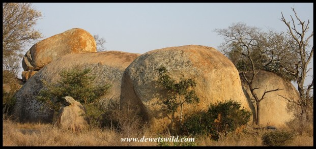 Lions at Orpen Rocks (can you spot her?)