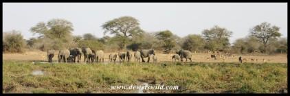 Elephants, impalas, wildebeest and zebra congregating at Leeupan
