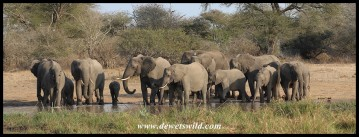 Elephants congregating at Leeupan