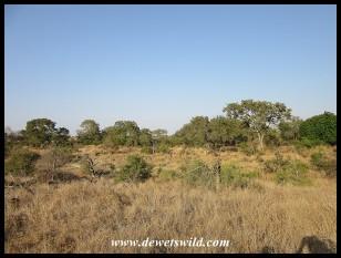 Sweni wilderness scenery