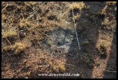 Funnel-web Spider nest