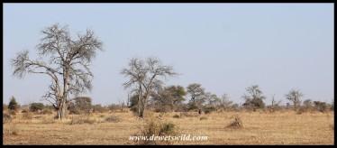 Wide-angle view on the Sweni plains