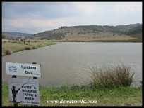One of the trout dams at Doornkop Fish & Wildlife Reserve